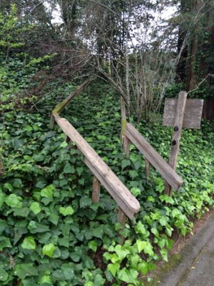 An abandoned staircase long overgrown with English Ivy.